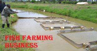 मछली पालन व्यापार