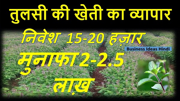 Tulsi Farming Business