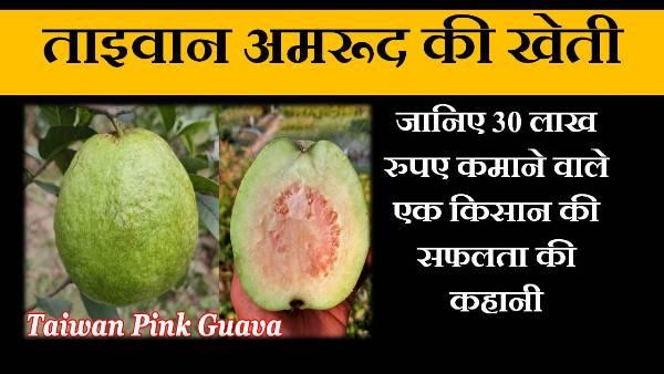 taiwan pink guava success story in hindi