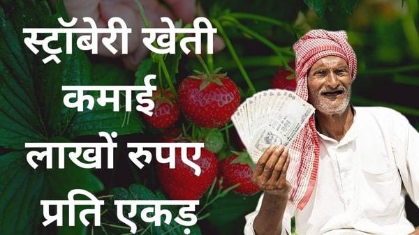 strawberry ki kheti